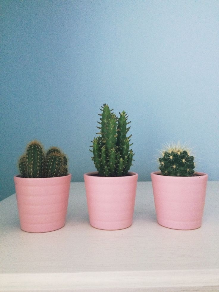 ohcean-ghost: got these lil guys from ikea ╰☆╮
