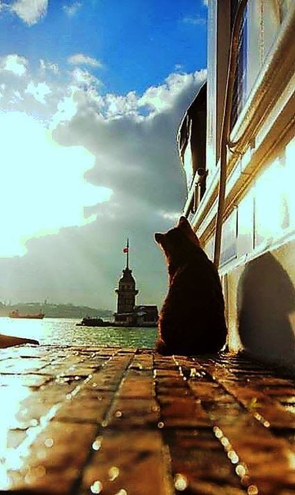 #maiden's tower, #istanbul #cat