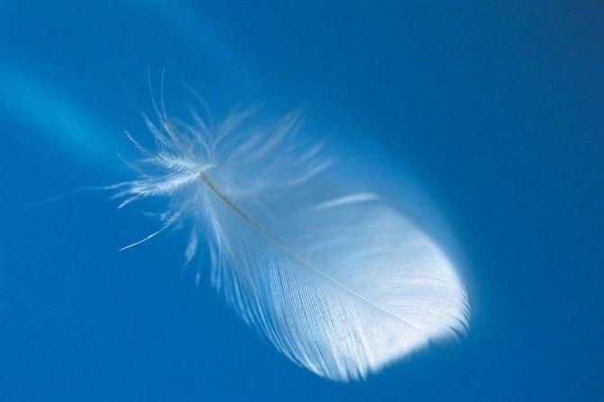 """Accogliere volutamente gli Arcangeli nella propria casa è un'esperienza unica, che consente di smuovereenergie stagnanti, generando una più celere crescita spirituale e un cambiamento spesso rivoluzionario; tutto subisce una trasformazione, sia per la persona richiedente, che per i familiari e quanti ruotano attorno a lei. Come ho avuto già modo di scrivere nell'articolo """" Una danza di Luce"""", del 13 maggio scorso, ognuno di noi, fin dal momento della sua origine, ha acca..."""