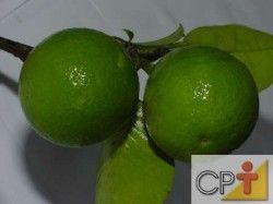 A lima ácida Taiti, denominada limão Taiti, destaca-se, hoje, no Brasil, como um dos frutos cítricos de maior importância comercial, com área estimada em cerca de 30.000 hectares