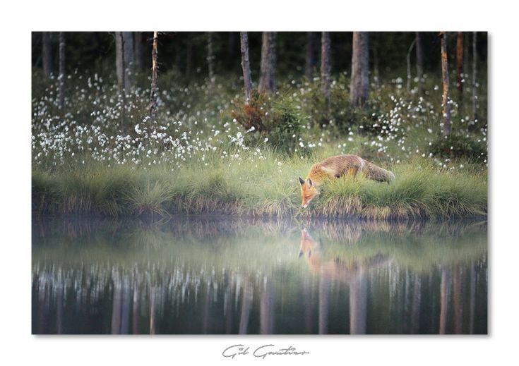 """"""" Reflection naturelle"""" - Gil Gautier Photographe par Nature"""