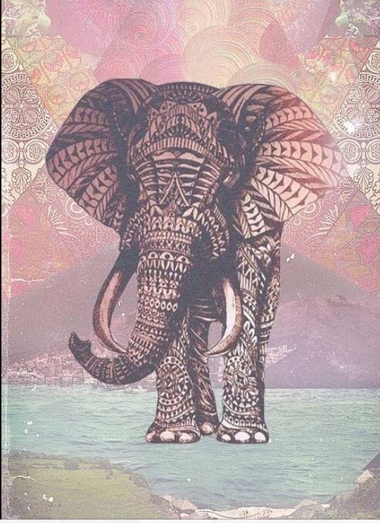 Elephants ❤️❤️