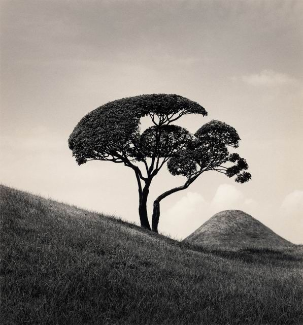 Mountain, Japan, White Photography, Kenna Photography, Michael Kenna, Photographers Art, Arbol Trees, Creative Inspiration, White Photographers
