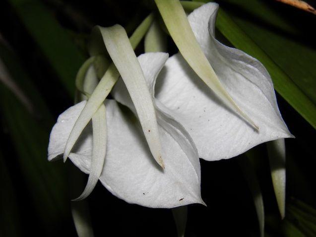 Las flores son un regalo de la naturaleza para embellecer cada rincón. Ésta se encuentra en la #HosteriaMarySol en #SanAndres
