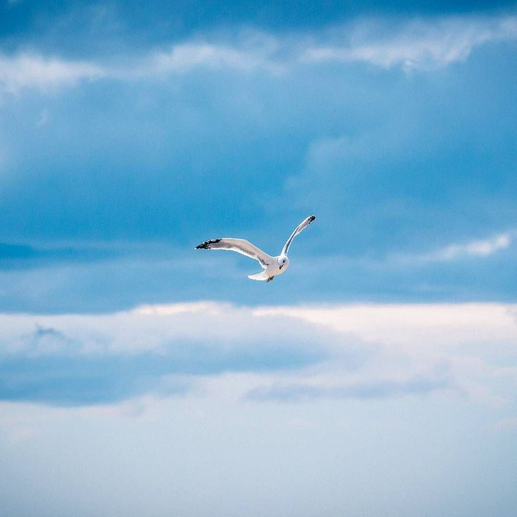 Livingston Jonathan Livingston. Young seagull separated from his flock an autumn cloud break. . .. ... #livingston #jonathan #jonathanlivingston #seagull #flock #birds #flying #flight #alone #clouds #blue #teal #novel #literature #lektira #split #croatia #znjan #seascape #aerial #canon #canonhrvatska #canonphotography #canonglobal #canoncroatia #croatiafulloflove #adventure #lifetime #youth