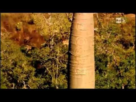 La Terra Vista dal Cielo - La Foresta - 1° parte - 1/2