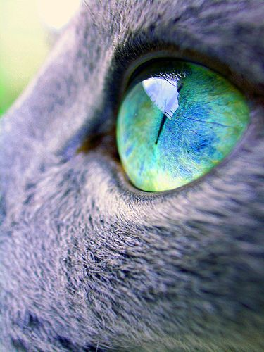 """""""Nature breaks through the eyes is a cat."""" --Irish Proverb"""