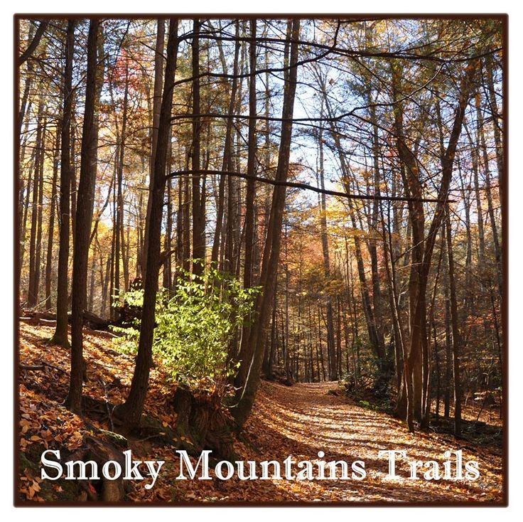 397 best the breathtaking smoky mountains images on for Privately owned cabins in the smoky mountains