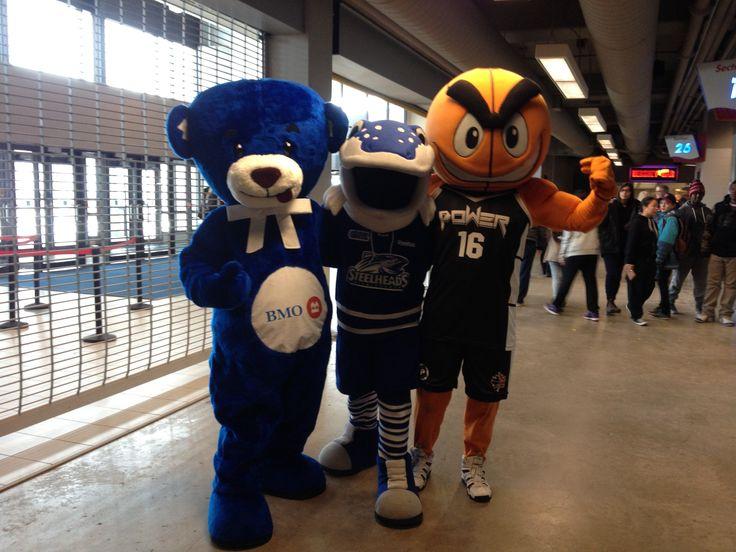Loonie Times Custom Mascots - BMO Bear, Mississauga Steelheads 'Sauga', Mississauga Power 'POW'