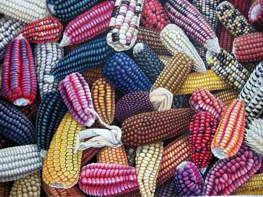Maiz - Bolivia posee mas de 36 especies de maiz, entre los mas conocidos esta el maiz de marlo, el maiz mote, el maiz morado....