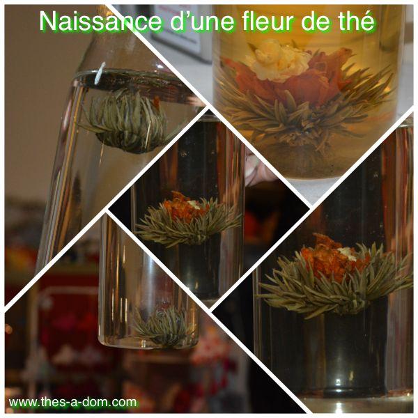 Le joli spectacle d'une éclosion dune fleur de thé !! http://www.thes-a-dom.com  #fleurdethé #fleur de thé #thesadom