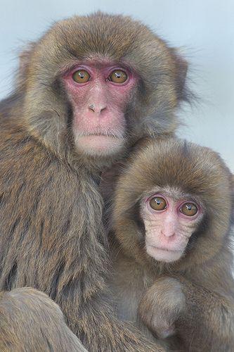 Sisters   Awaji Monkey Center #japan #hyougo