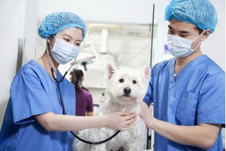 Open House Activities for Veterinary Clinics | eHow