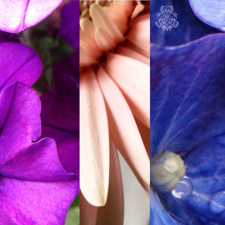 #写真 #花 #flower #ファインダー越しの私の世界