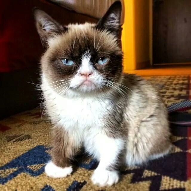 465 Best Images About GRUMPY CAT & POKEY On Pinterest