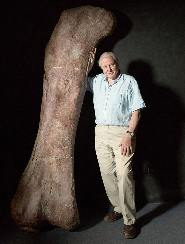 Sir David Attenborough with a replica of the titanosaur's femur