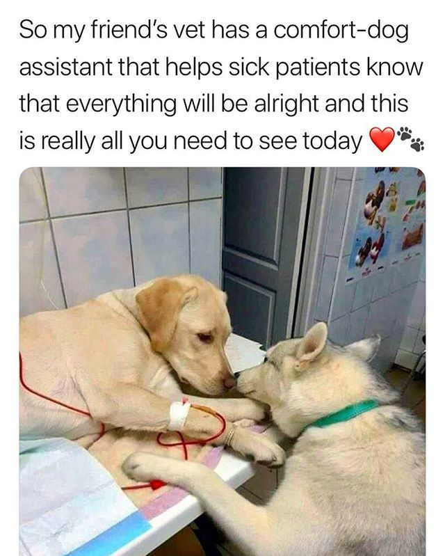 Just In Case You Need Something To Cheer You Up This Wednesday Memesdaily Love Dogsofinstagram Goodvib Cute Animals Cute Funny Animals Funny Animal Memes