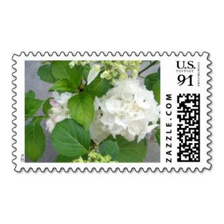 Nature Stamps, White Flower http://www.zazzle.com/white_flower_hortensia_stamps_postage_stamps-172210522885404345 Yoursparklingshop: Cards & More: Zazzle.com Store