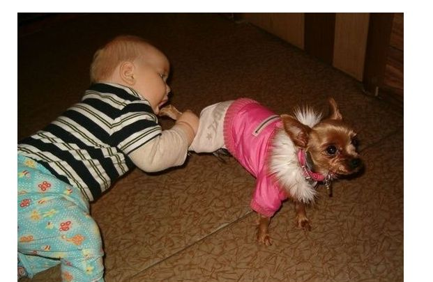 Mmmm, puppy looks scrumptious. | See more cute and funny kids videos here http://gwyl.io/