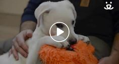 Puppy Can't Swallow Food On His Own, His Rescuers Made Him An Awesome Chair To Help