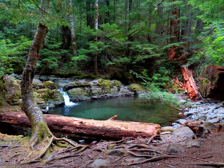 Pool In Gifford Pinchot National Forest [OC] [1600 X 1200]   landscape Nature Photos