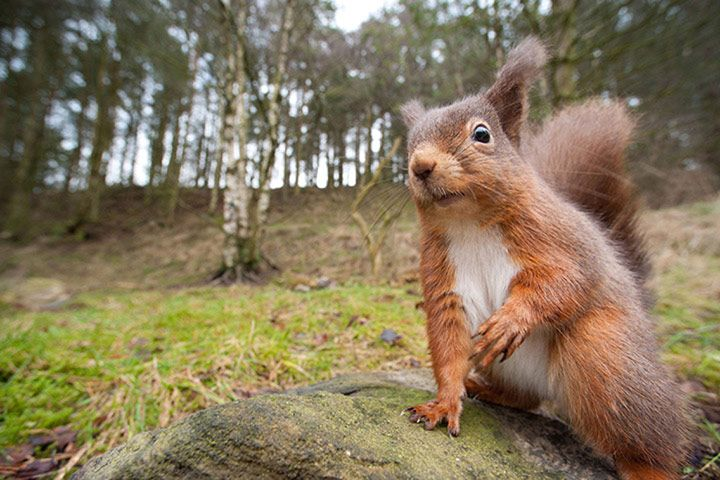 8 woodland animals to spot!