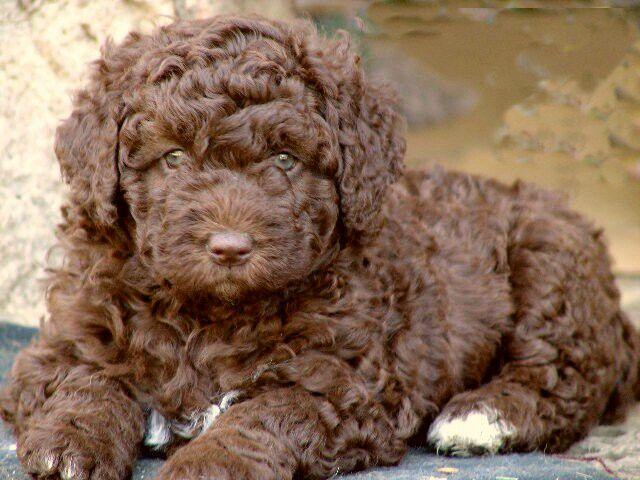 Puppy 2 month