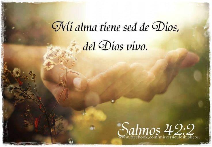 Salmos 42:1-2 Como el ciervo brama por las corrientes de las aguas, Así clama por ti, oh Dios, el alma mía. Mi alma tiene sed de Dios, del Dios vivo♔