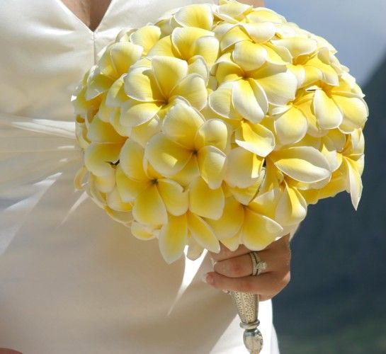 78 Ideas About Plumeria Bouquet On Pinterest Plumeria Flowers Hawaiian We