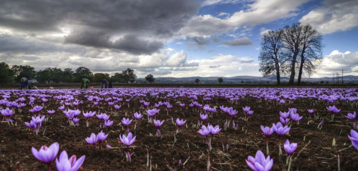 The beautiful crocus villages of Kozani