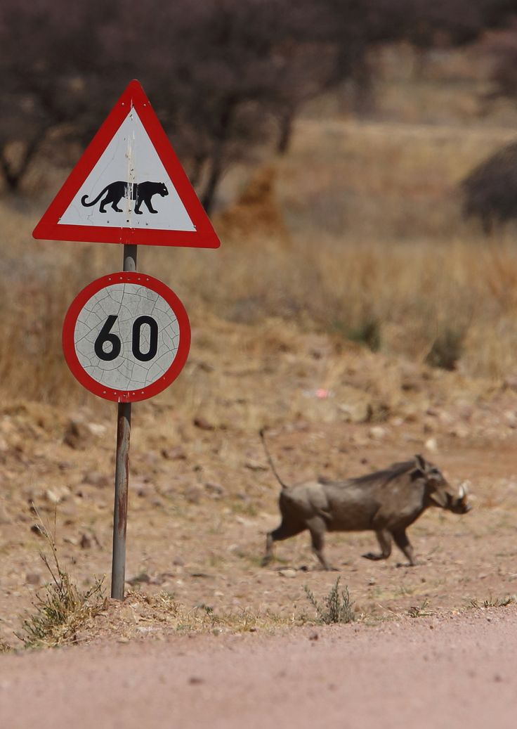 Road sign and warthog © Jonathan Rossouw