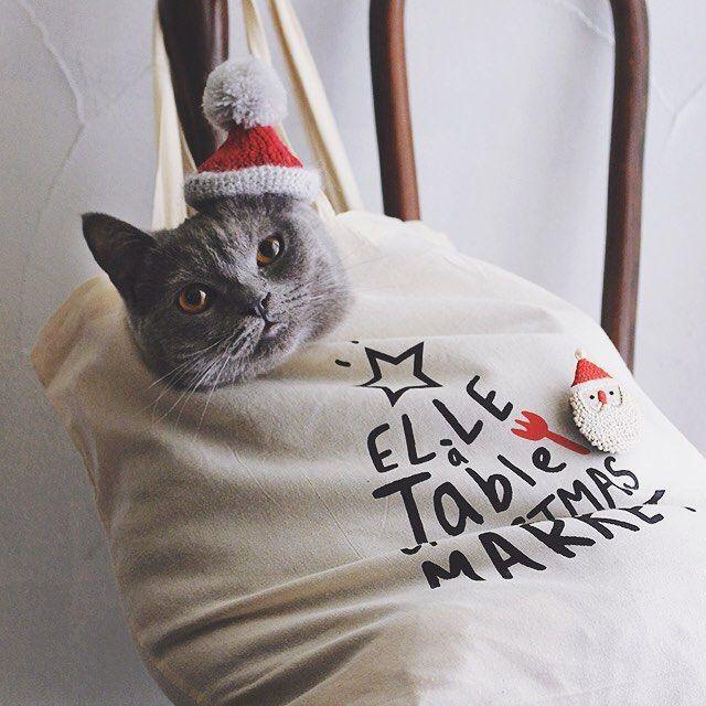 買いものバッグが好きなボナ子さん。開催中のElle a tableのイベントでもらったエコバッグでぬくぬく〜サンタの帽子とブローチは家内の手作り  . . . #エルアターブルクリスマスマーケット #エルアターブル #elleatable #二子玉 #二子玉川 #高島屋 #樋口愉美子 #樋口ボナ #サンタ #bonahiguchi #エコバッグ #ブリショ