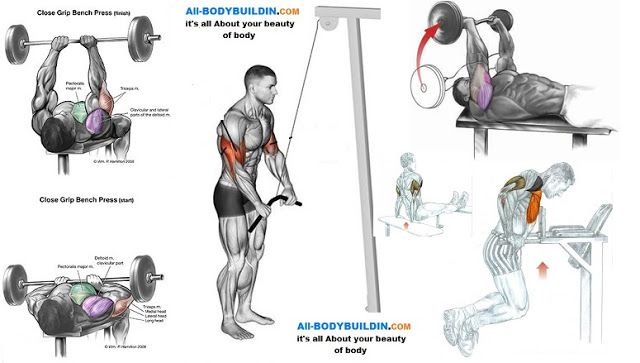 Best Exercises For the Triceps