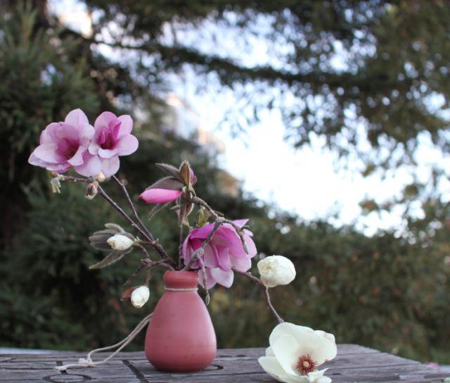 magnolia ikebana