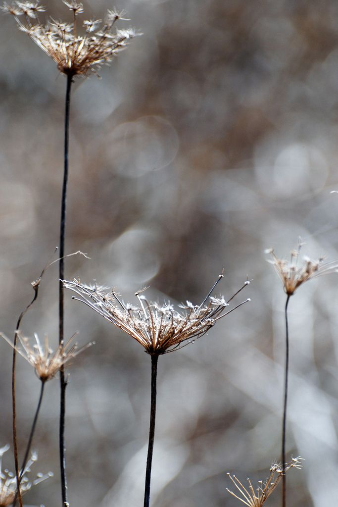 """""""Old Lace"""" ~ Photography by Shirl on Flickr."""