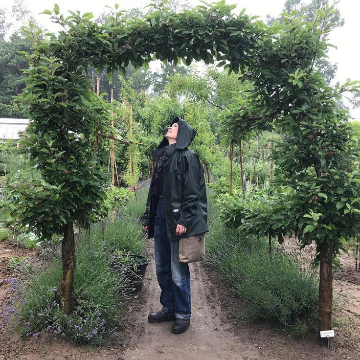 """351 gilla-markeringar, 8 kommentarer - Skillnadens Trädgård (@skillnadens) på Instagram: """"Titta så fint med äppelportal! Vill ha många.  #trädgård #odla #äppelträd @mandelmannstradgardar"""""""