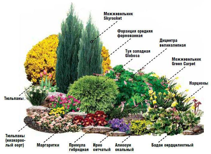 клумба непрерывного цветения вариант 1