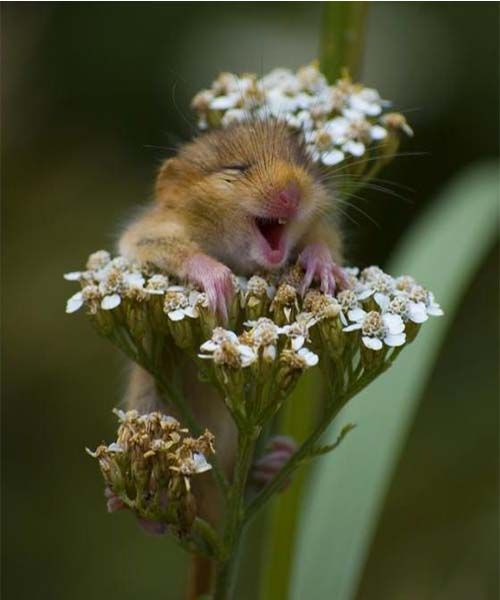 He's so happy being on that flower and its the cutest thing I've seen!!!!!!