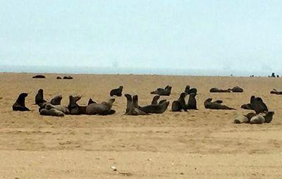 foche_ Walvis Bay - Namibia