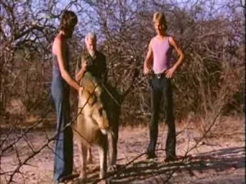 Christian The Lion Story - Love Can Transcend Any Bounds