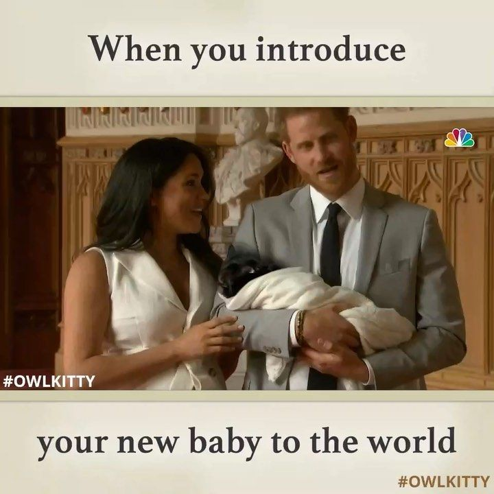 Cats Are Known To Possess All Kinds Of Talents They Are Great At Hunting Excellent At Manipulating Hu New Baby Products Prince Harry And Meghan Popular Memes