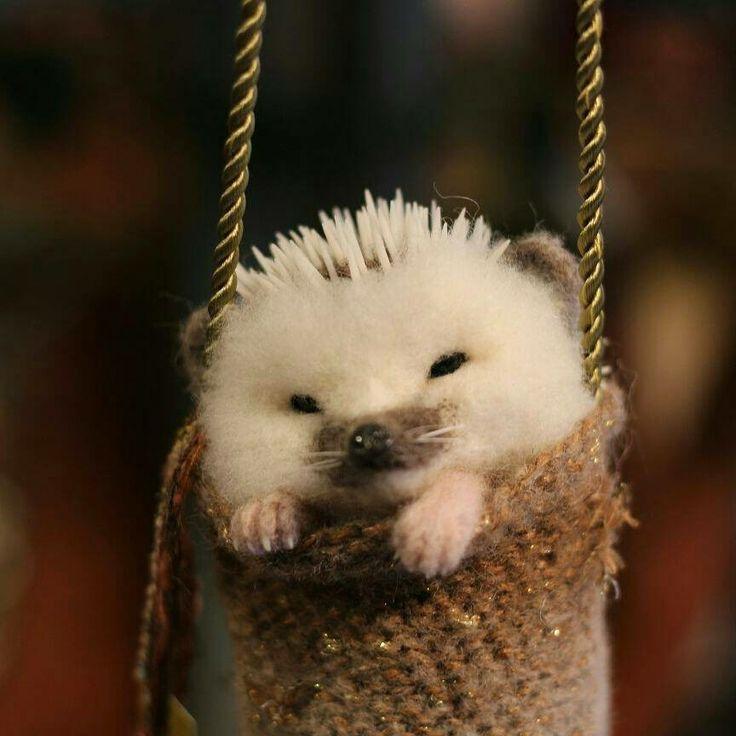 Dangling Hedgehog loves to swing! :)