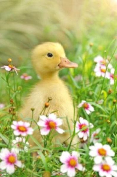 A sweet duckling in flowers.
