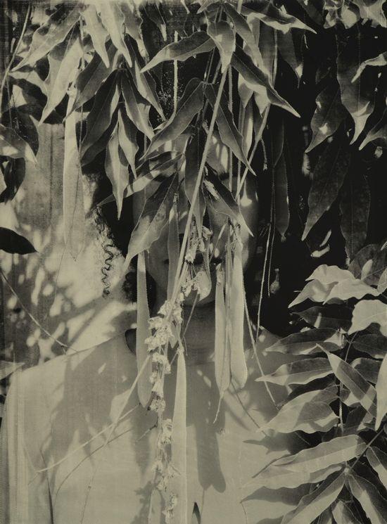 Zohra Opoku, 'Wisteria' (2015), Screen-print on paper, 105 x 79cm, Edition of 2