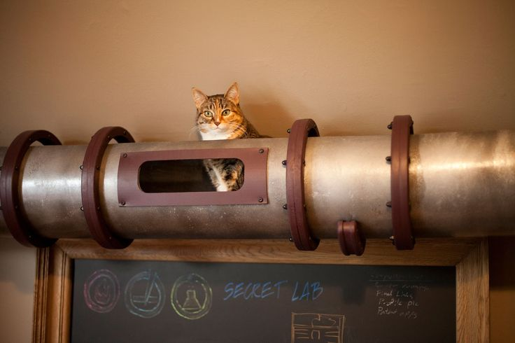 Cat Transportation System.  I need this to give my kitty a path to the windows that doesn't cross the dog!