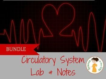 Circulatory System Pack  Complete mini-unit on circulatory system at a discounted price.  You will need a textbook, review book, website or some background reading on the circulatory system. This pack includes a foldable to help students take notes and or