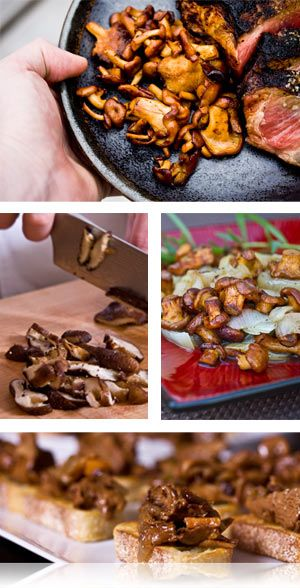 Wild mushroom aficionados love golden chanterelles for their firm texture and deliciously earthy flavor.