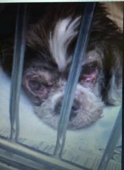 UPDATE: Rescued by Underdog Rescue of Florida. Please help Doc with his veterinary expenses. Neglected, abused and dumped at shelter: 'I used to be a beautiful dog'