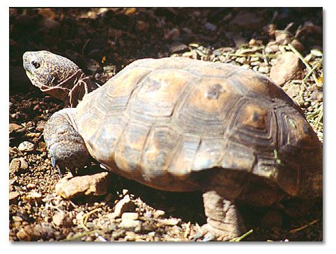 how to tell if your tortoise is dying