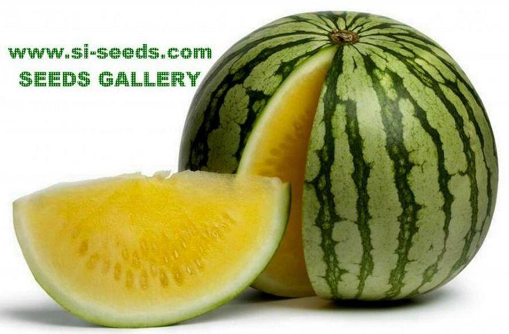 Gelbe Wassermelone Samen super süss